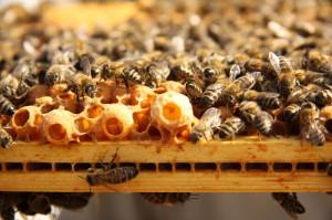 Moray Beekeepers' Association